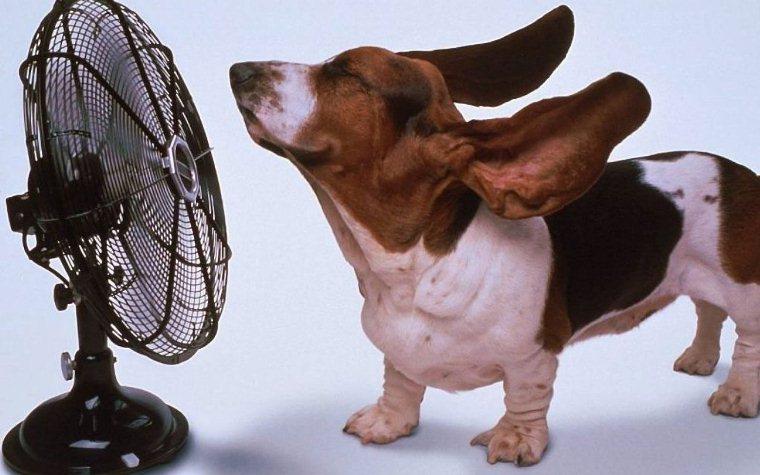 Trời nóng cũng ảnh hưởng đến nhiệt độ tủ
