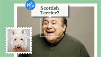 """Vui vẻ với ứng dụng của Microsoft: """"Bạn là loài chó nào?"""""""